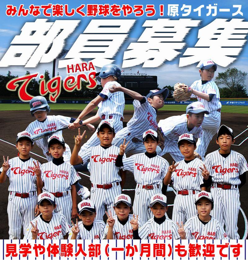原タイガース団員募集2013